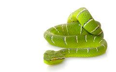 snake egypt anti-aging
